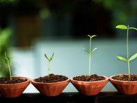 5 שלבים לבניית מודל עסקי לסטארטאפ שלך